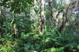 The Rainforest in the Botanical Gardens of Nelspruit - Shandon Lodge