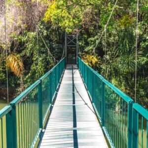 Suspension bridge in the botanical gardens nelspruit - Things to do in Nelspriut - Shandon Lodge