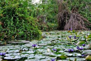 A pond in the lowveld botanical gardens - Nelspruit Attractions - Shandon Lodge