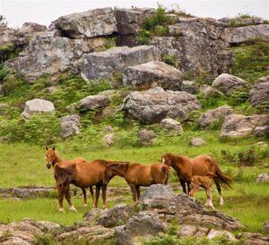 Horses in Kaapsehoop - Nelspruit Attractions - Shandon Lodge